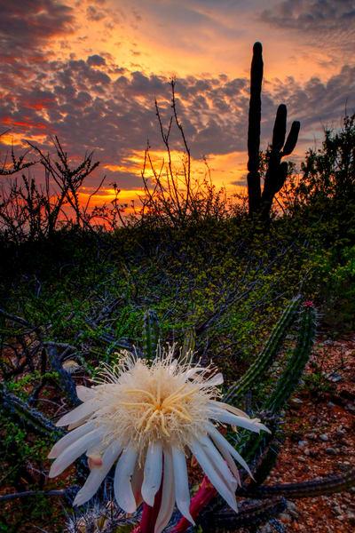 Baja Flower 2392 Photography Art | Craig Primas Photography