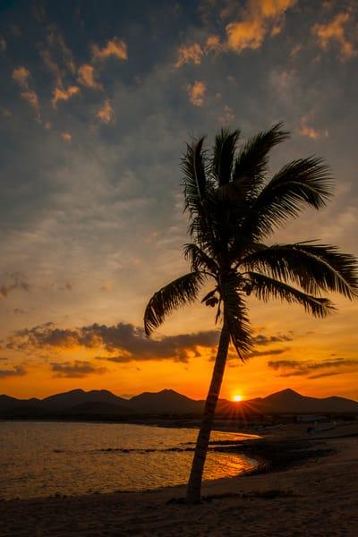 Palm Sunset Photography Art | Craig Primas Photography