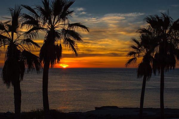 Palm Sunrise Photography Art | Craig Primas Photography