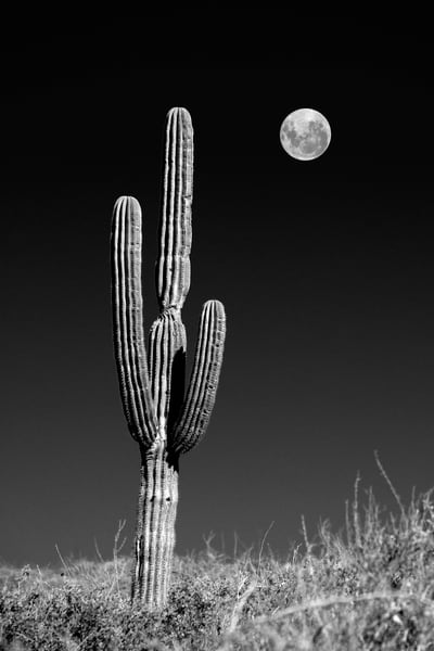 Moon And Cardones Photography Art | Craig Primas Photography