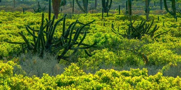 Baja Garden Photography Art | Craig Primas Photography