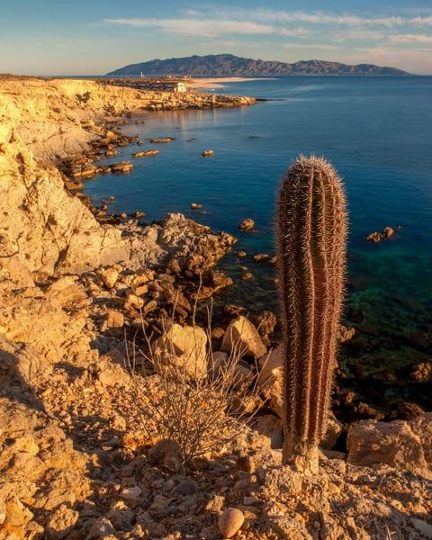 Cliff Cactus Photography Art | Craig Primas Photography