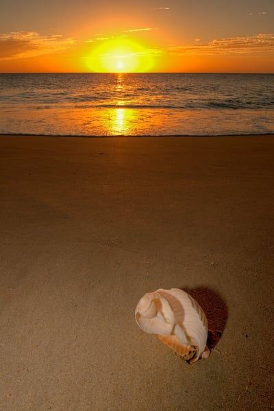 Stranded Photography Art | Craig Primas Photography