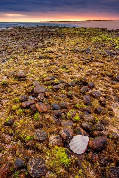 Coral Shelf Photography Art | Craig Primas Photography