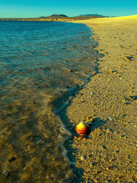 Lonesome Shell Photography Art | Craig Primas Photography