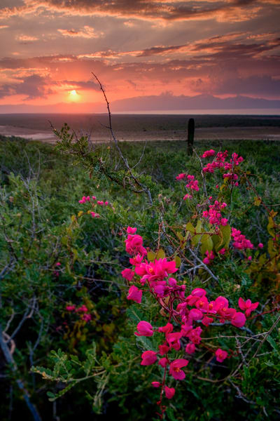 Pink Flower Sunset Photography Art | Craig Primas Photography