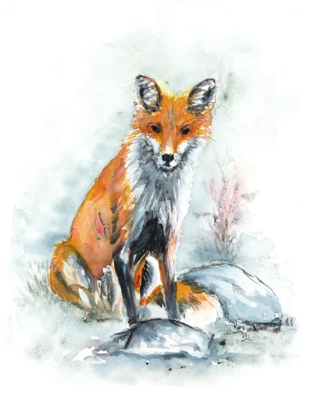 Evening Fox Art | Debra Bruner Studio