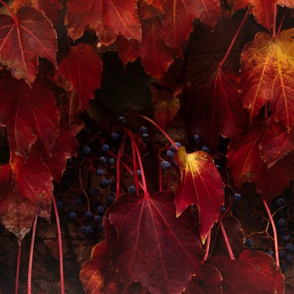 Autumn, 1994 - Fine art photography by Ellen Wyckoff