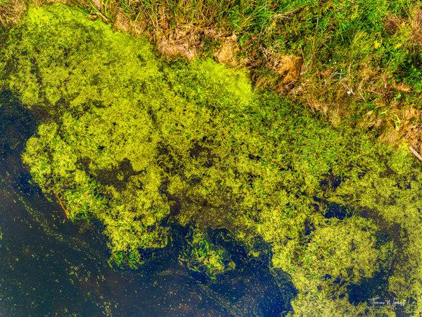 Northside Pond, 2019 Photography Art | Thomas Wyckoff Photography