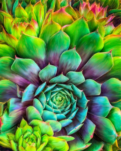 Succulent Splendor fine art print by Christina Stefani - Stefani Fine Art