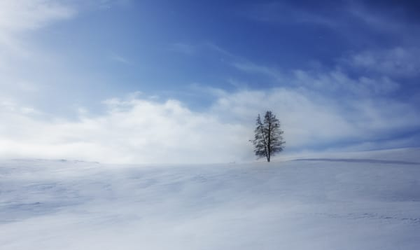 Yellowstone Solitude