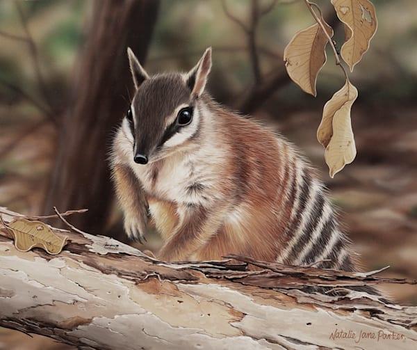 Termite Trek - Numbat | Australian Native Wildlife