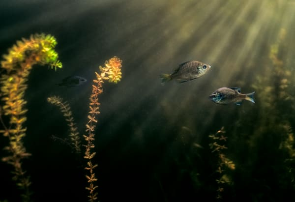 Bluegill Retreat Photography Art | Trevor Pottelberg Photography