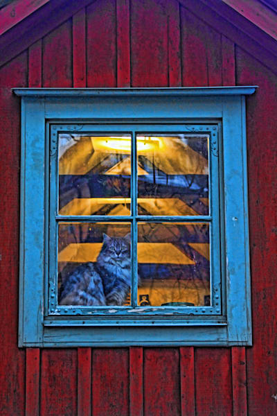 Cat in Swedish Window|Fine Art Photography by Todd Breitling