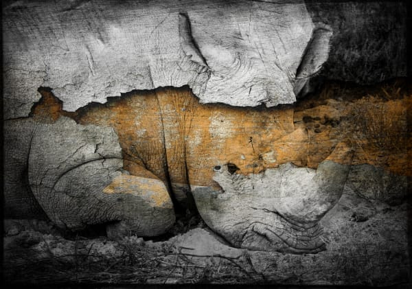 Rhino No. 1, Print, 2018 by artist Carolyn A. Beegan