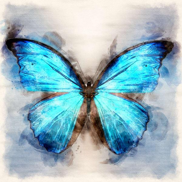 The Bluest Butterfly art print by Christina Stefani