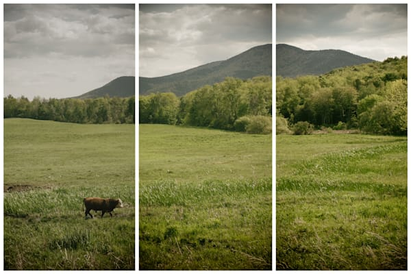 Vermont Farm & Field Photography | Fine Art Triptychs | Multi Panel Art | Nathan Larson Photography.