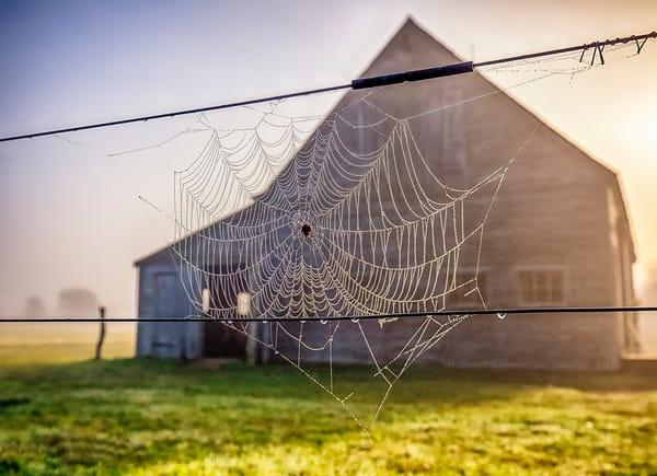 West Tisbury Web