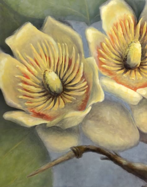 Tulip Tree Blossoms Art | RPAC Gallery