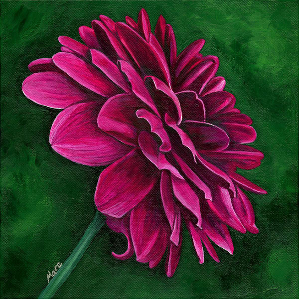 Acrylic painting of a single red dahlia flower by artist Mary Anne Hjelmfelt of Mare's Art