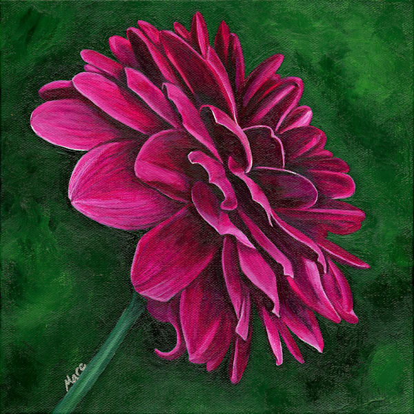 Original acrylic painting of a single red dahlia flower by artist Mary Anne Hjelmfelt of Mare's Art