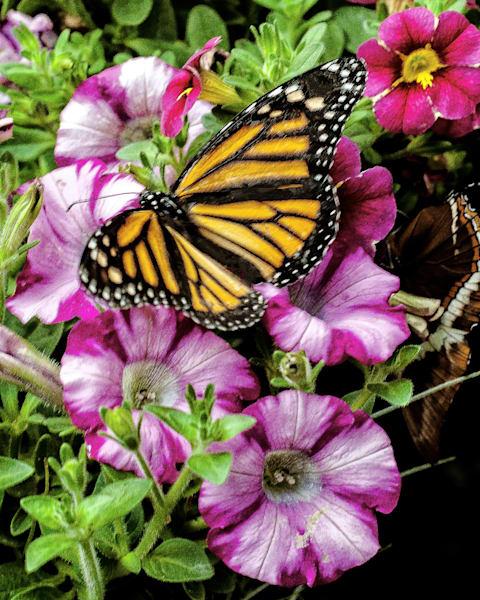 Flower garden and Butterfly