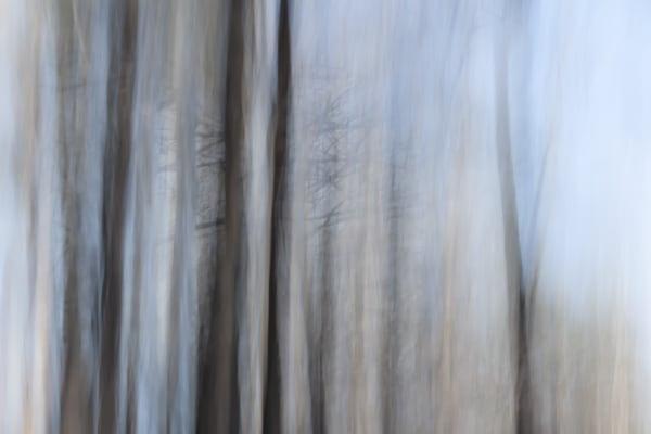 Thorny Art | davinart