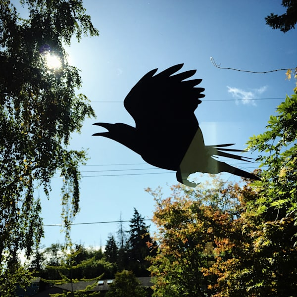 Crow Window Decal to Stop Birds Flying into Your Windows