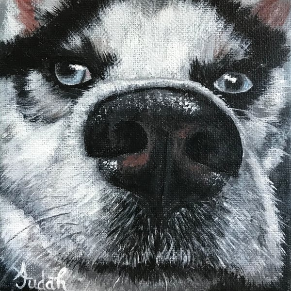 Dog 3/3