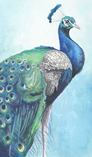 Peacock In Blue Art | Kelsey Showalter Studios