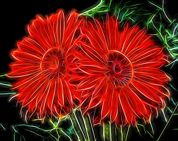Electric Gerbera Daisy Photography Art | frednewmanphotography
