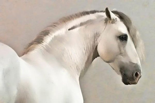 White Stallion Art | KJ's Studio