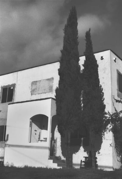 Cypress  Trees & Condemned Building Photography Art | Peter Welch