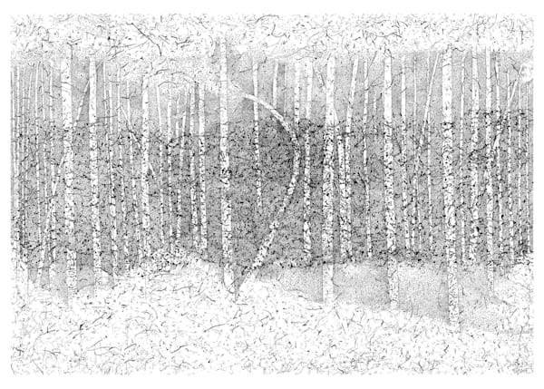 Birch Forest Edition One, 41x29.5""