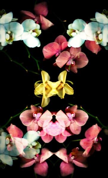 orchid matrix