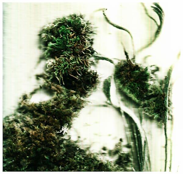 Moss II