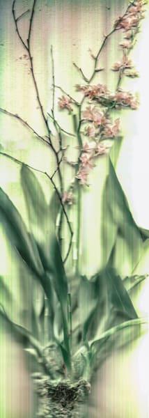 Garden Party Fleur