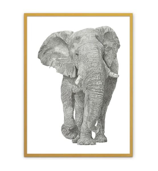 "Fine Art Paper w/ Brass Frame 30""x40"""