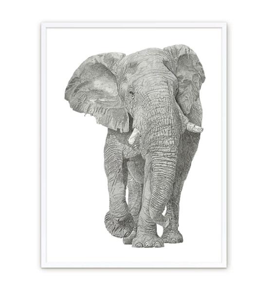 """Fine Art Paper w/ White Frame 30""""x40"""""""