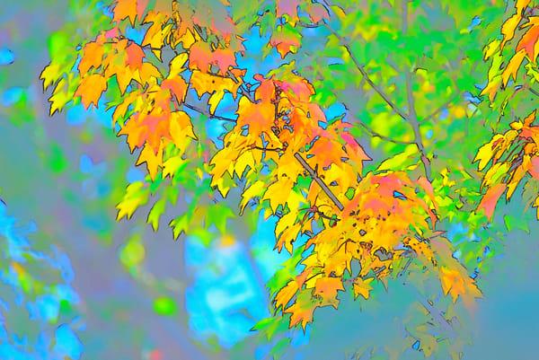 Leaves Color Sketch