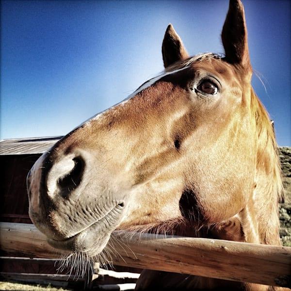 Bright Eyed Horse, Focus Ranch Art | photographicsart