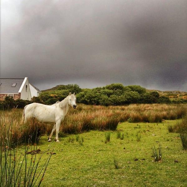 White Horse,  Achill Island Art   photographicsart