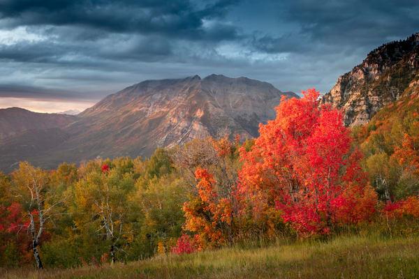 cascade meadows red maple