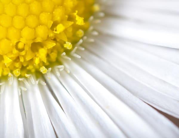 Daisy Fleabane flower macro - shop fine-art notecards | Closer Views