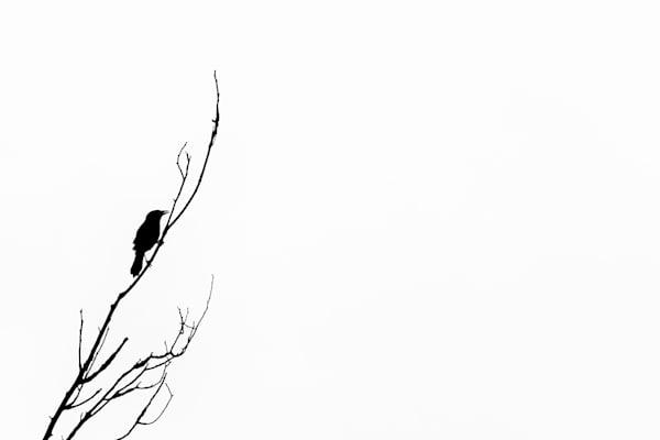 Bird Silhouette Iii Photography Art | Nathan Larson Photography