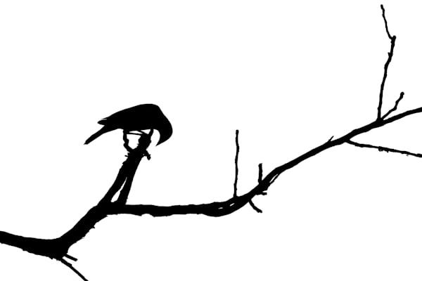 Bird Silhouette Vi Photography Art | Nathan Larson Photography, LLC
