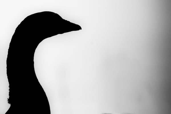 Bird Silhouette V Photography Art | Nathan Larson Photography