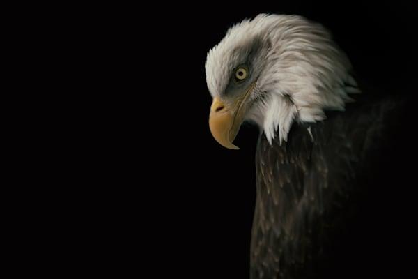 Eagle Bow Photography Art | Nathan Larson Photography, LLC