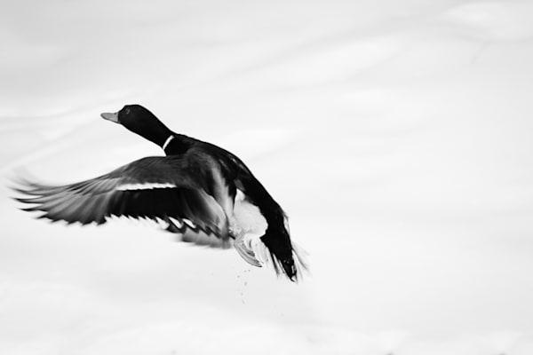 Take Off Photography Art | Nathan Larson Photography