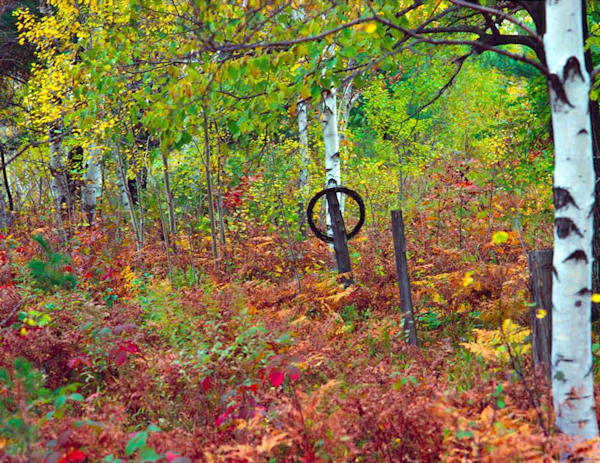 Old fence in autumn woodland - shop fine-art notecards | Closer Views